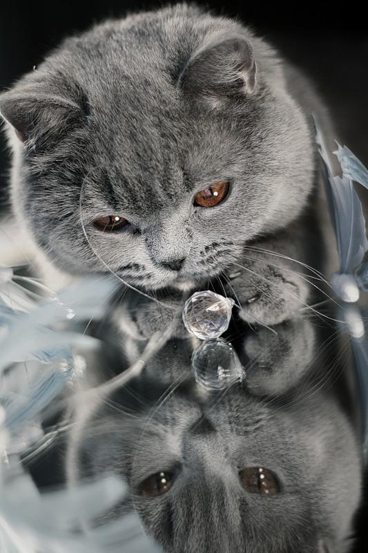 котик продает муассаниты
